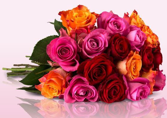 Miflora-Shiny-roses