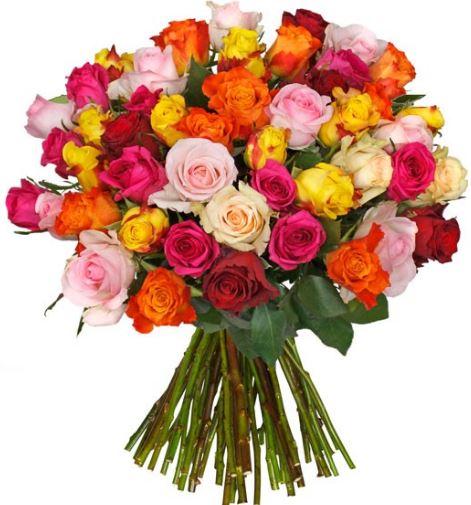 blume-ideal-44-rosen