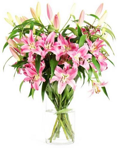 lilien-blumeideal