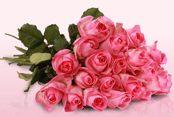 miflora-lovely-pink