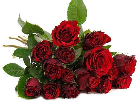 rote-rosen-blumeideal